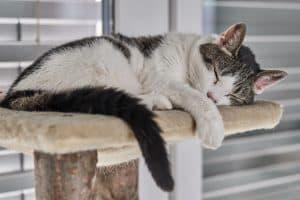 gato durmiendo en un árbol para gato