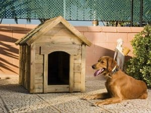 caseta de perro pequeña