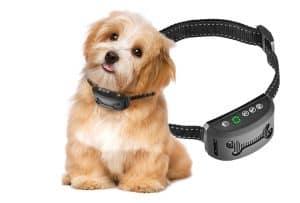 perro pequeño con collar antiladridos