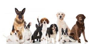 varios perros