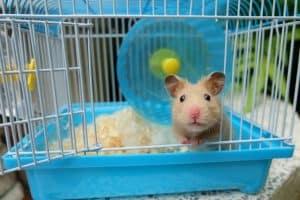 hamster asomado por una jaula de hamster