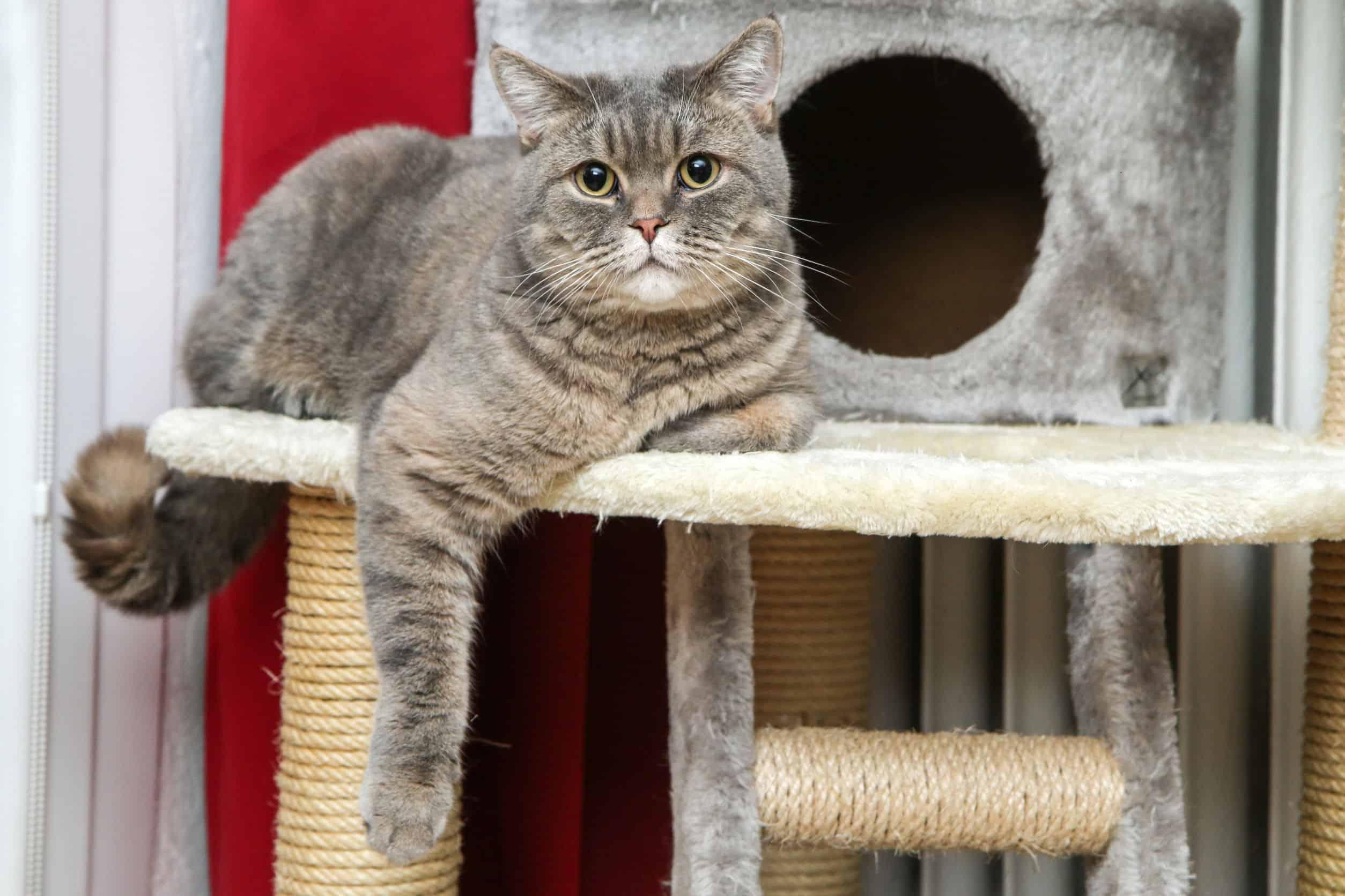 gato en un árbol para gato