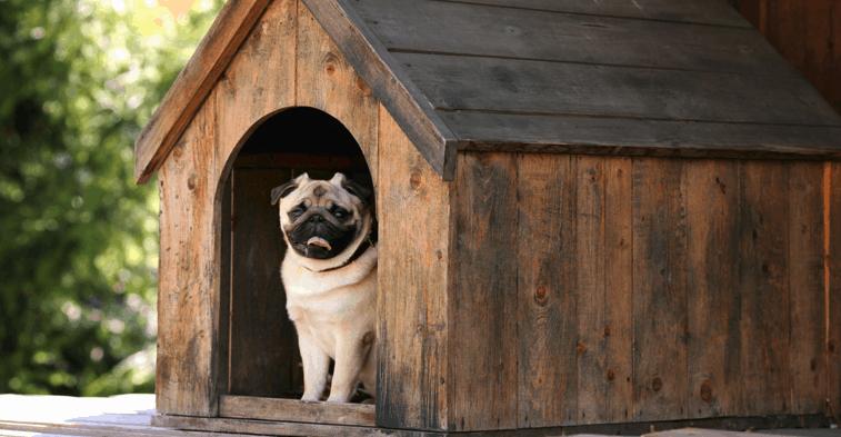 perro en una caseta de perro