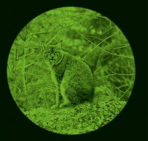 visión nocturna de animal con prismáticos