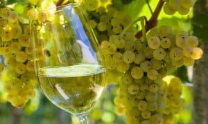 uvas y copa de vino blanco