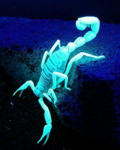 lámpara de luz UV en forma de escarabajo