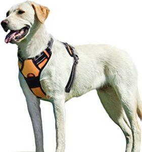 perro con arnés para perro
