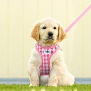 perro con arnés para perro estampado