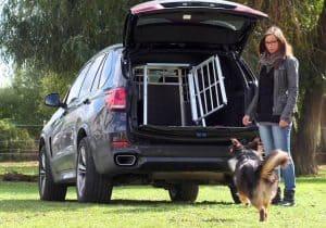 perro corriendo hacia una caja para perro en un maletero