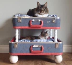gatos en cama para gato doble