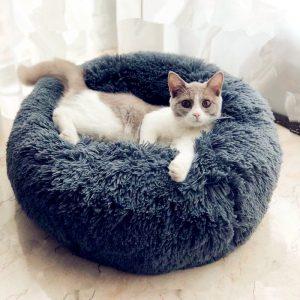 gato en una cama para gato