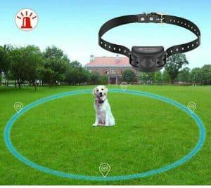 collar antihuida para perro