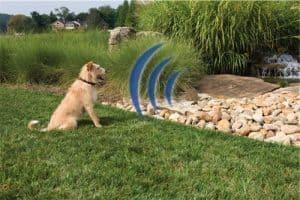 chien portant un collier anti-fuite pour chien