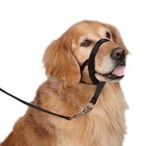 perro con collar de adiestramiento para perro