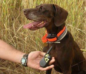 perro llevando un collar de adiestramiento para perro
