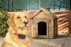 perro con collar antihuida para perro y caseta