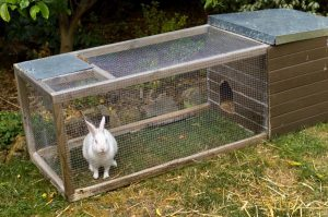 conejo en una jaula para conejo