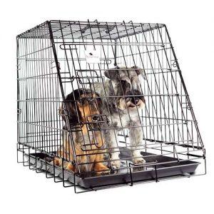 caja para perro con dos perros