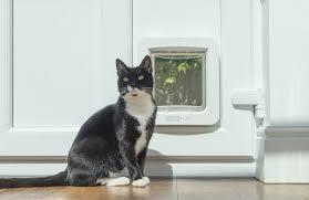 gato frente a una gatera electrónica
