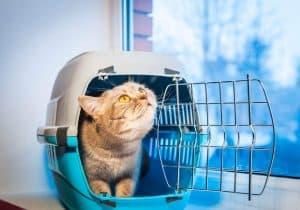 gato en un trasportín para gato de plástico