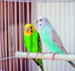 pájaros en una jaula para pájaros