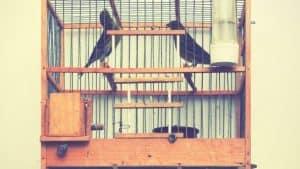 jaula para pájaros tradicional