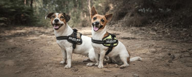 perros con arnés para perro