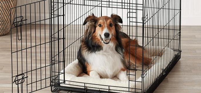 perro en una caja para perro