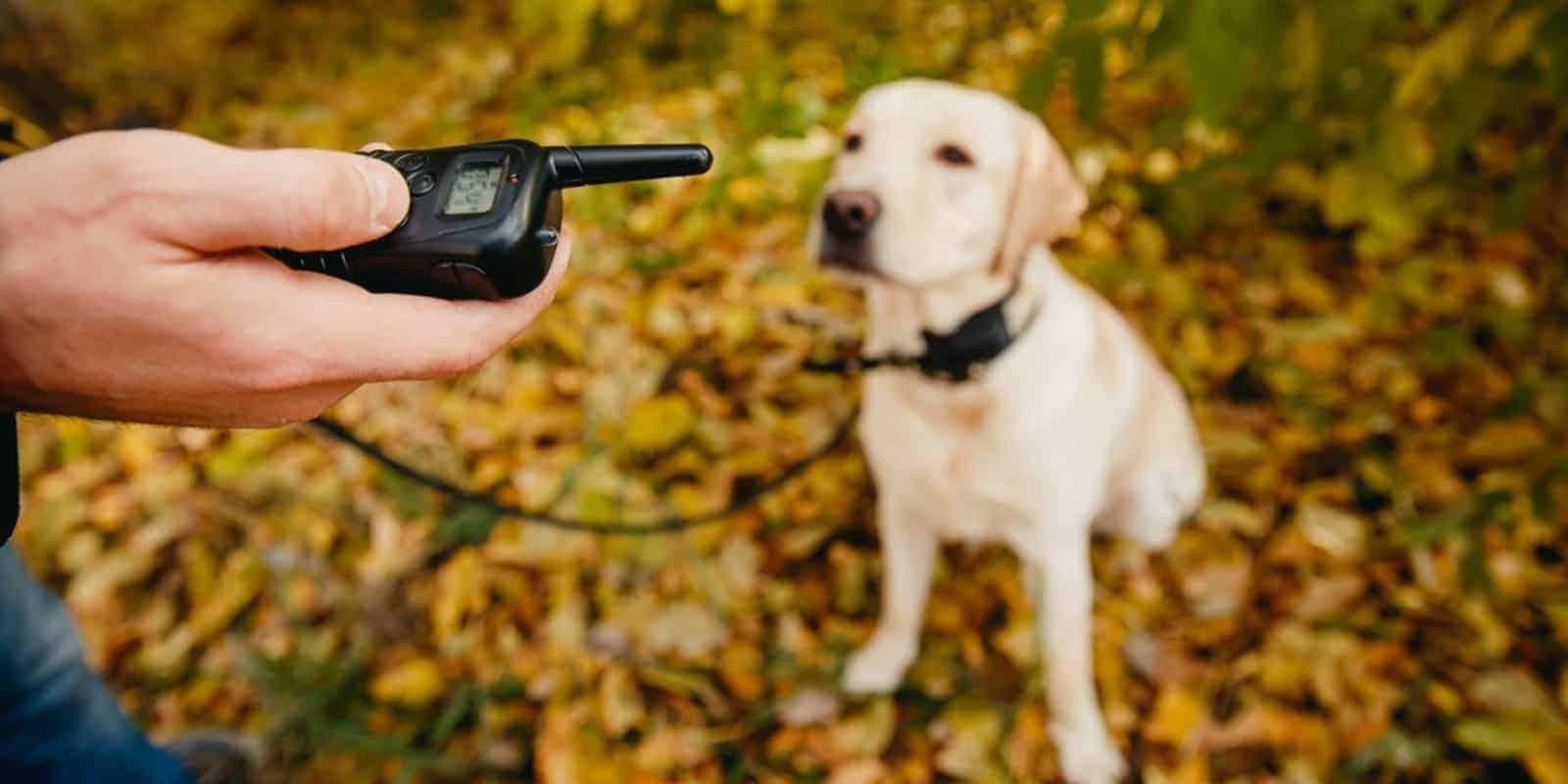 perro con collar antihuida para perro