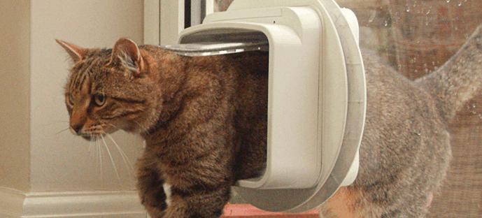 gato en una gatera electrónica