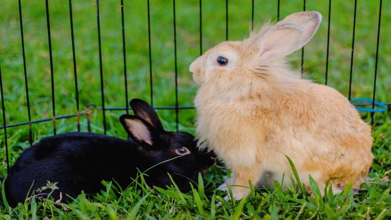 dos conejos en una jaula para conejo