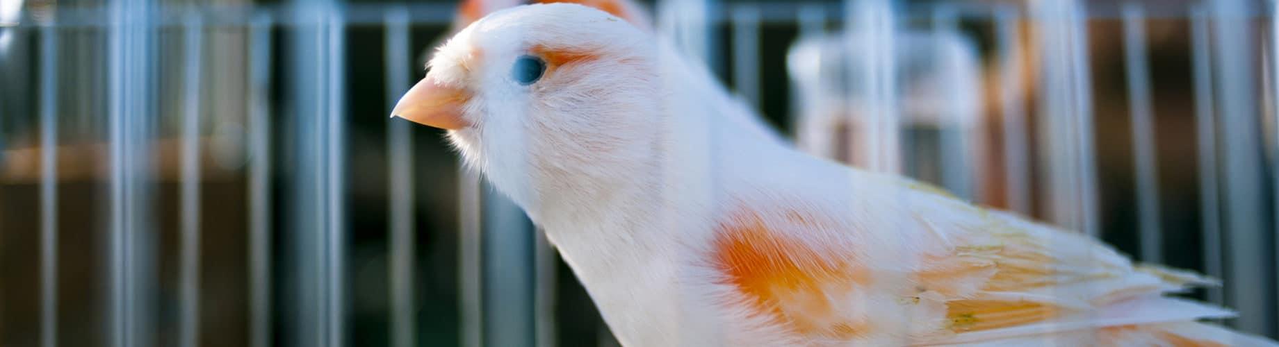 canario en una jaula para pájaros