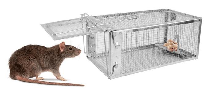rata y trampa para ratas
