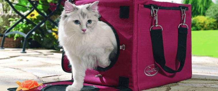 gato saliendo de un trasportín