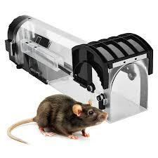 trampa para ratas y rata