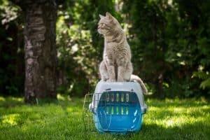 gato sobre un trasportín para gato